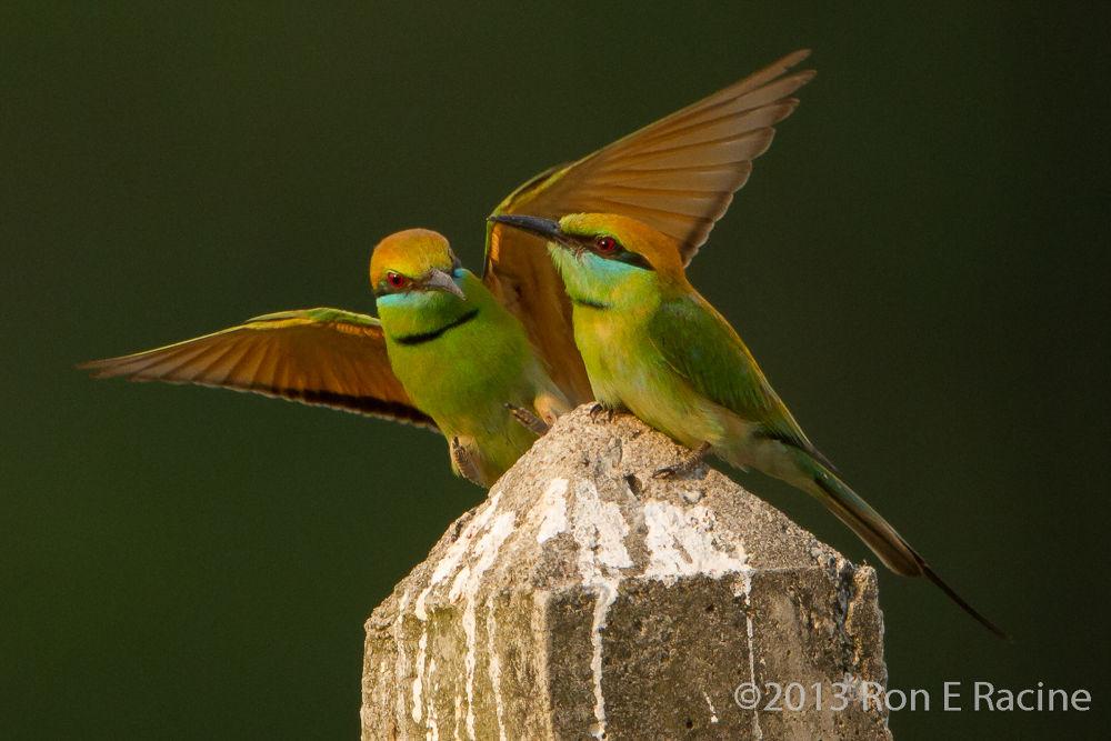 Photo in Random #birds #nature