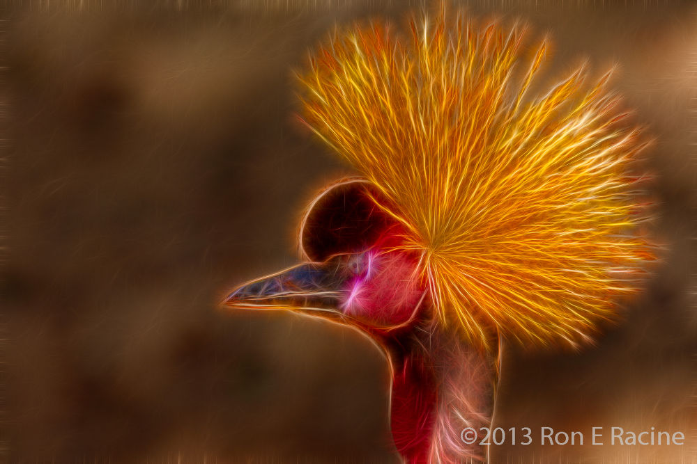 Photo in Random #birds #nature #singapore #fractalius
