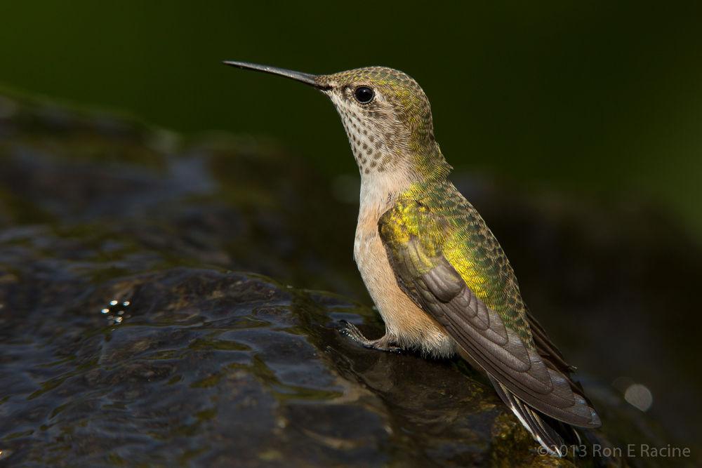Photo in Random #birds #nature #hummingbird