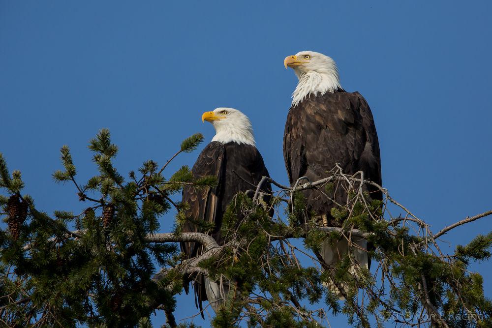 Photo in Random #birds #nature #wildlife #animals #eagles #baldeagle
