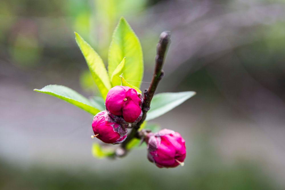 Photo in Random #flower #buds