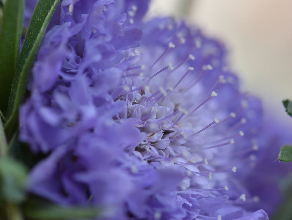 Photo in Macro #macro flower   beauty nature l