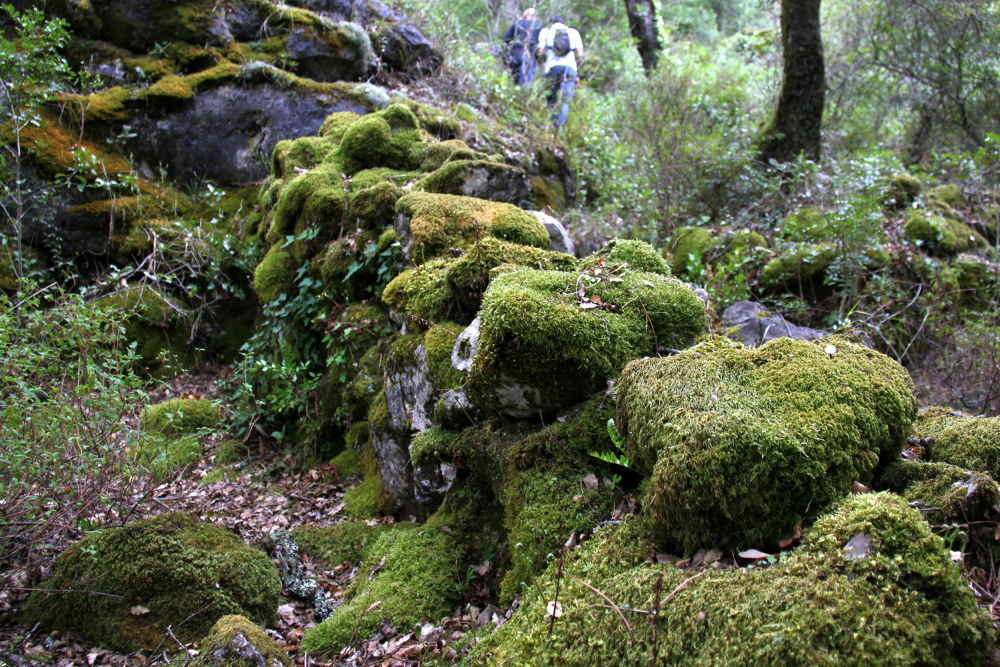 Photo in Nature #nature #sports #geocaching #paths #stone #green #portugal