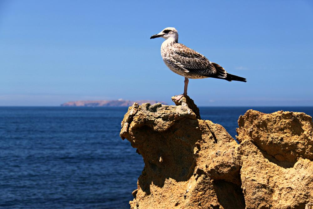 Photo in Animal #nature #sea #blue #sky #travel #birds #animals #portugal #life