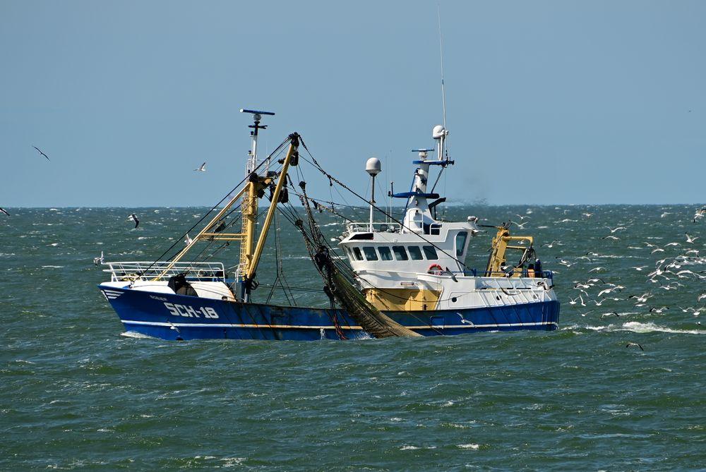 IMO 9223083 SCH18 Boeier NL 200505 Maasvlakte 1005