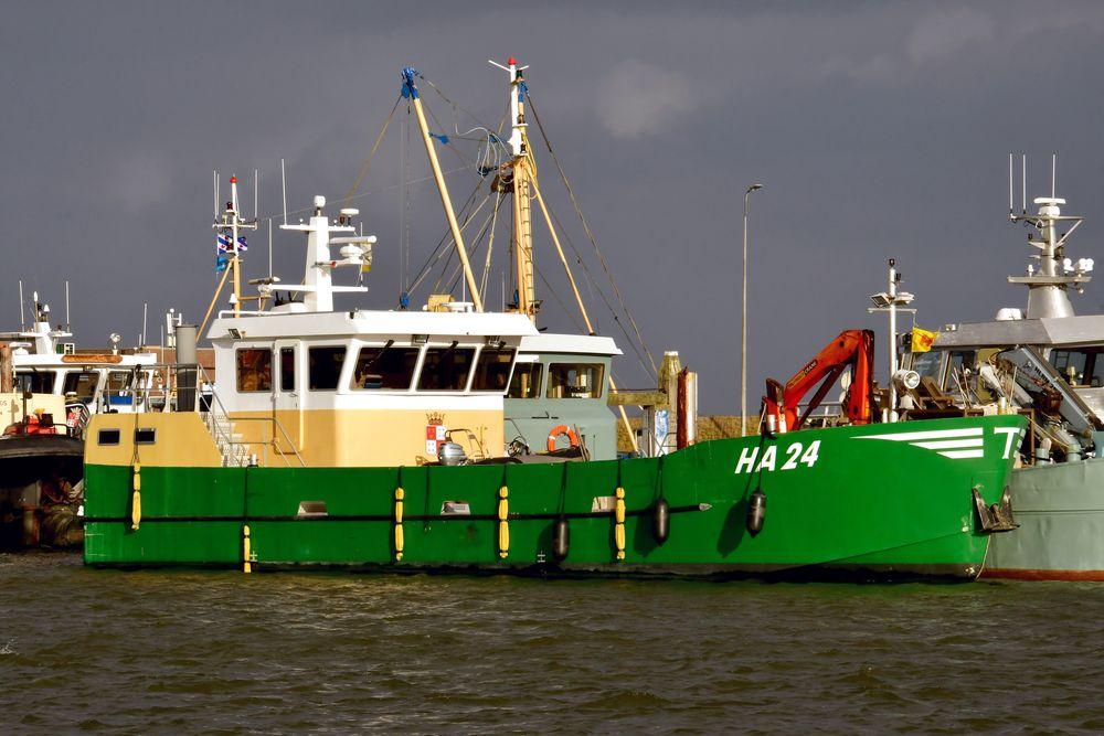 ENI 03170698 HA24 NL 191129 Lauwersoog 1001