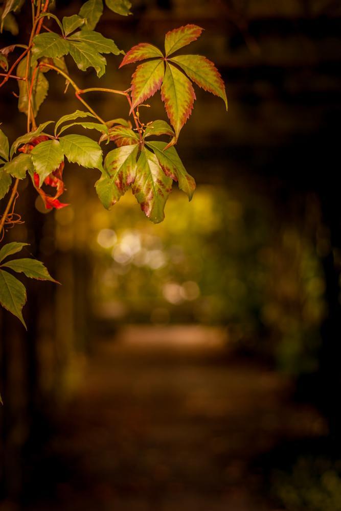 Photo in Nature #sweden #sverige #malmö #malmo #malmoe #nature #summer #bokeh #canon #450d