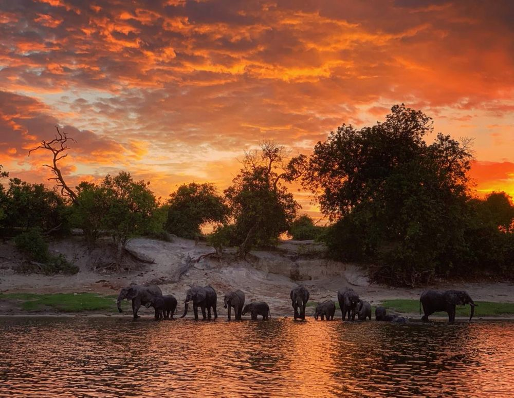 Photo in Animal #elephants #safari #uganda #groups #staying together #travel #wildpaw safari #setting sun