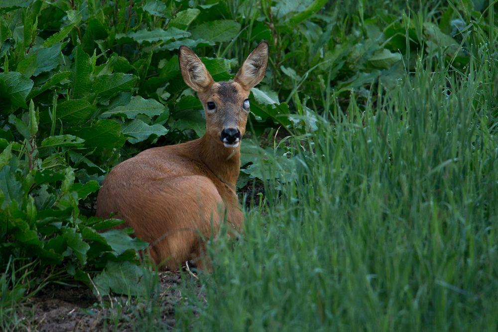 Photo in Animal #roe deer