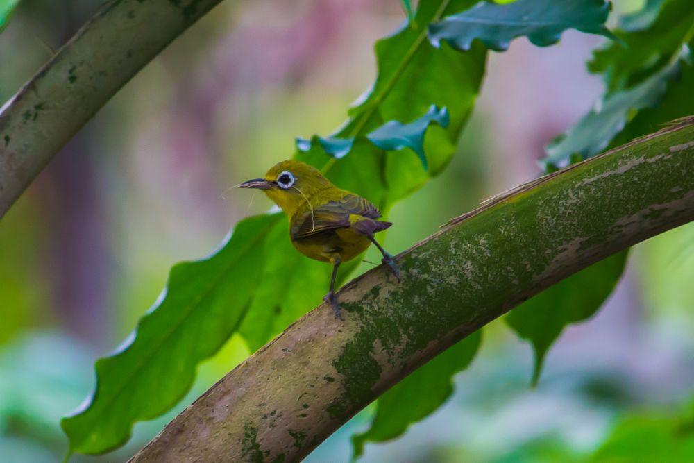 Photo in Nature #bird #green #nest materials