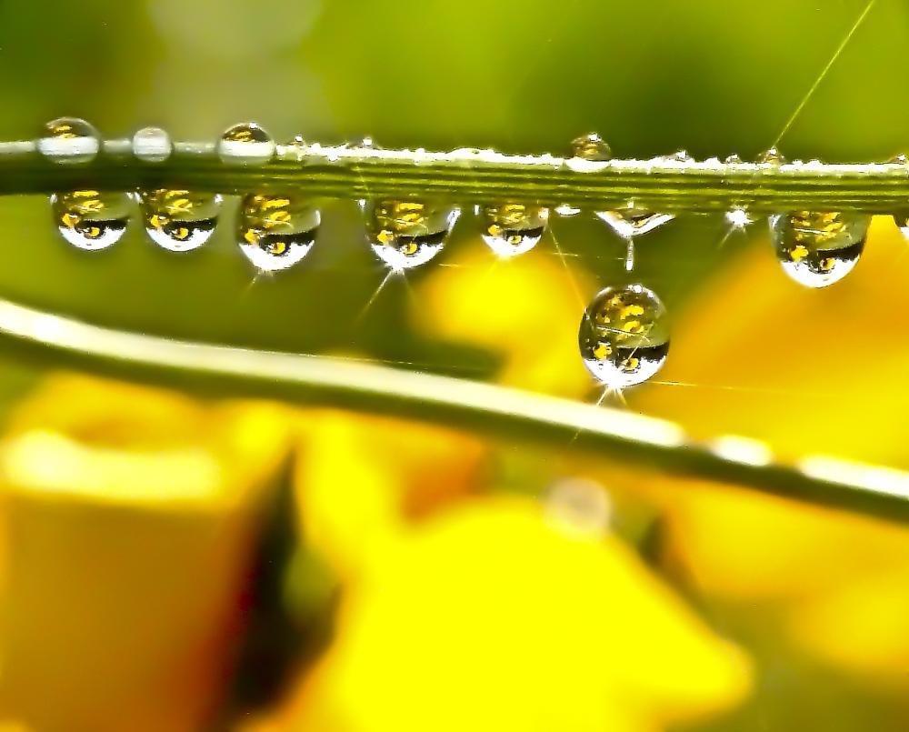 Photo in Macro #rain #drops #droplet #yellow #reflection #flowers #rays