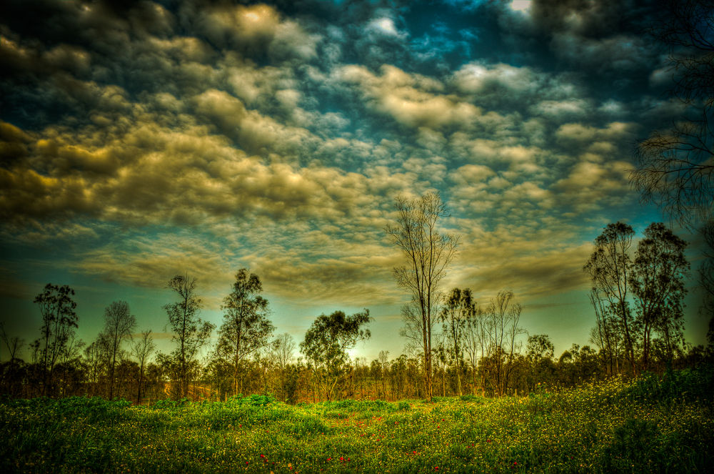 Photo in Nature #clouds #sky #field #trees #nature #landscape