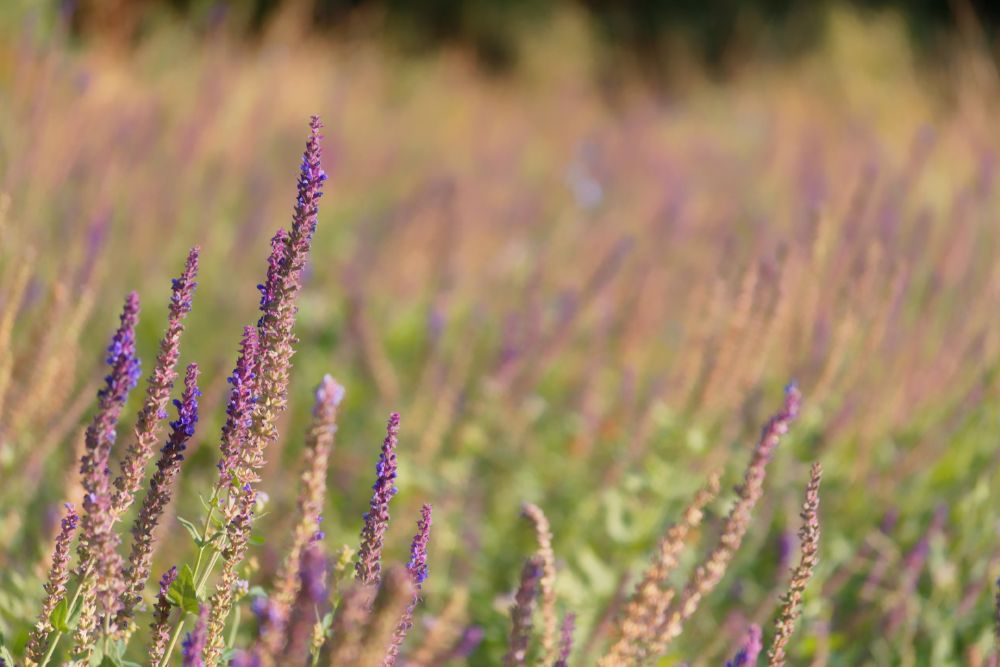 Photo in Random #flower #purple #nature