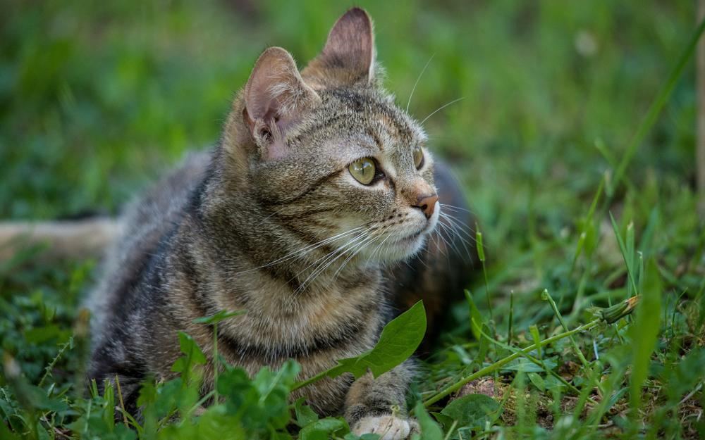 Photo in Animal #cats #animals #kitty #nikon d600 #sigma 150-500/5-6.3 #croatia #hrvatsko zagorje