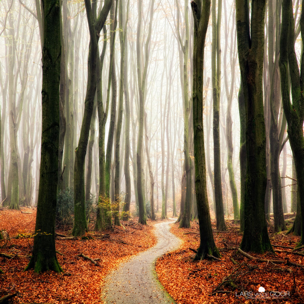 Photo in Landscape #forest #path #road #fall #winter #mist #trees #holland #landscape