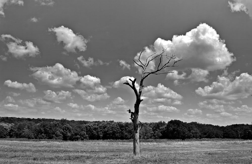 Photo in Random #tree #clouds #black #white