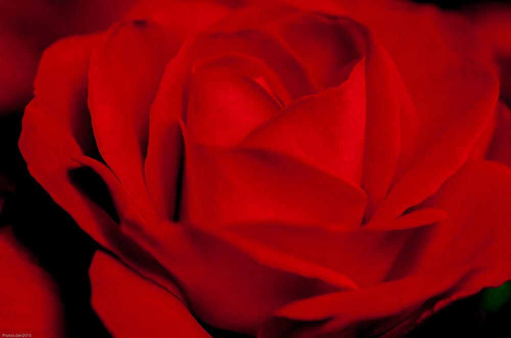Photo in Random #flower #fleur #red #nature