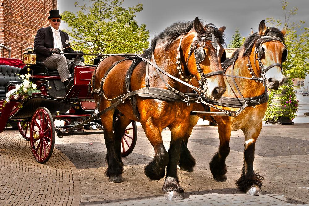 Photo in Random #chevaux de trait #boulonnais