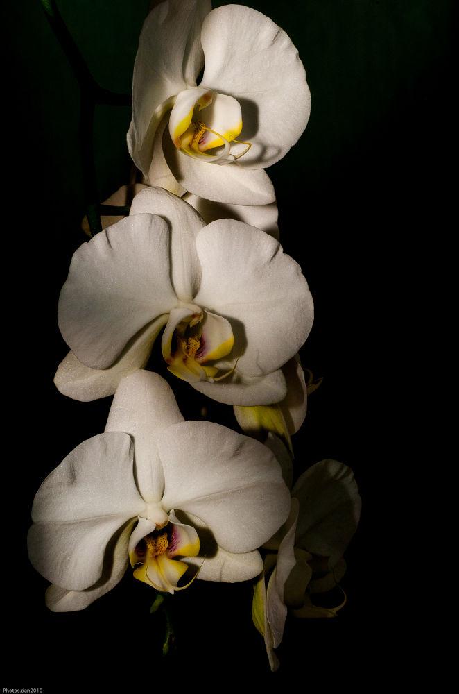 Photo in Random #nikon #60micro #orchidées #flower #fleur #ypa2013