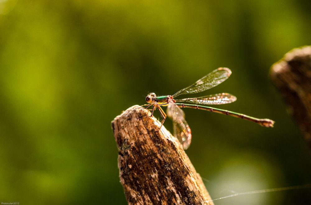 Photo in Macro #insecte #libellule