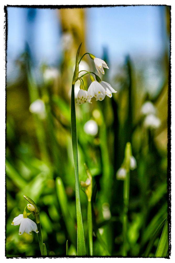 Photo in Nature #fleurs #nature #fujix-t1 #xf60mmf2.4r-macro