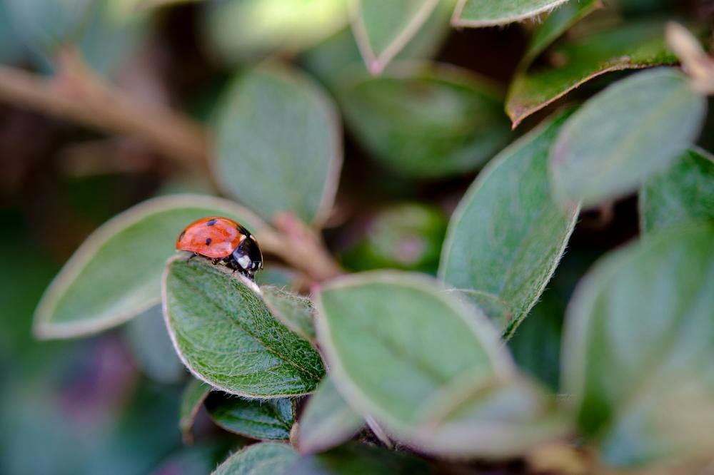 Photo in Nature #fuji #x-pro1 #xf60r2.4macro #macro #nature