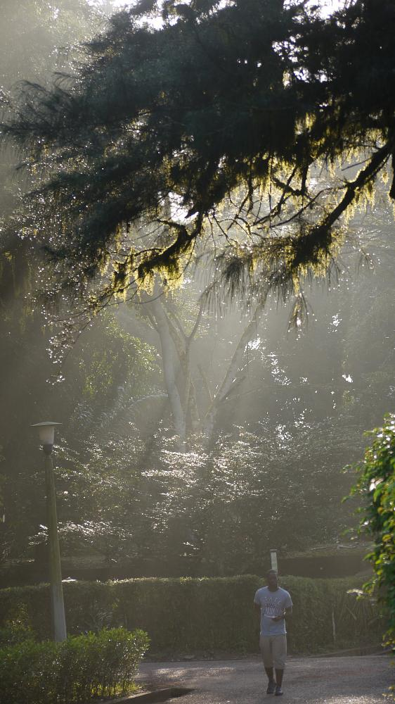 Photo in Random #botanical gardens