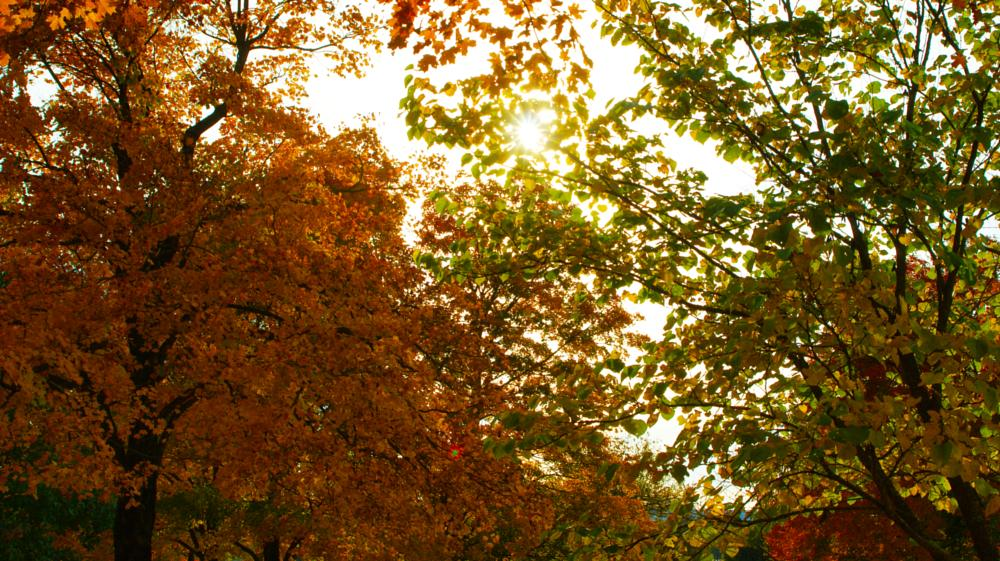 Photo in Landscape #trees #fall #cemetery #dslr #camera #cam