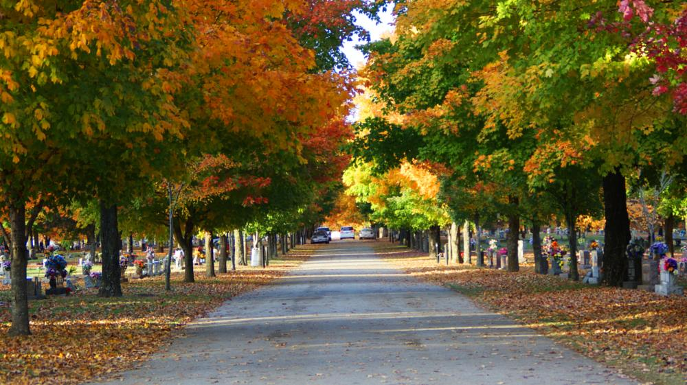 Photo in Landscape #road #trees #fall #dslr #camera #cam #cemetery