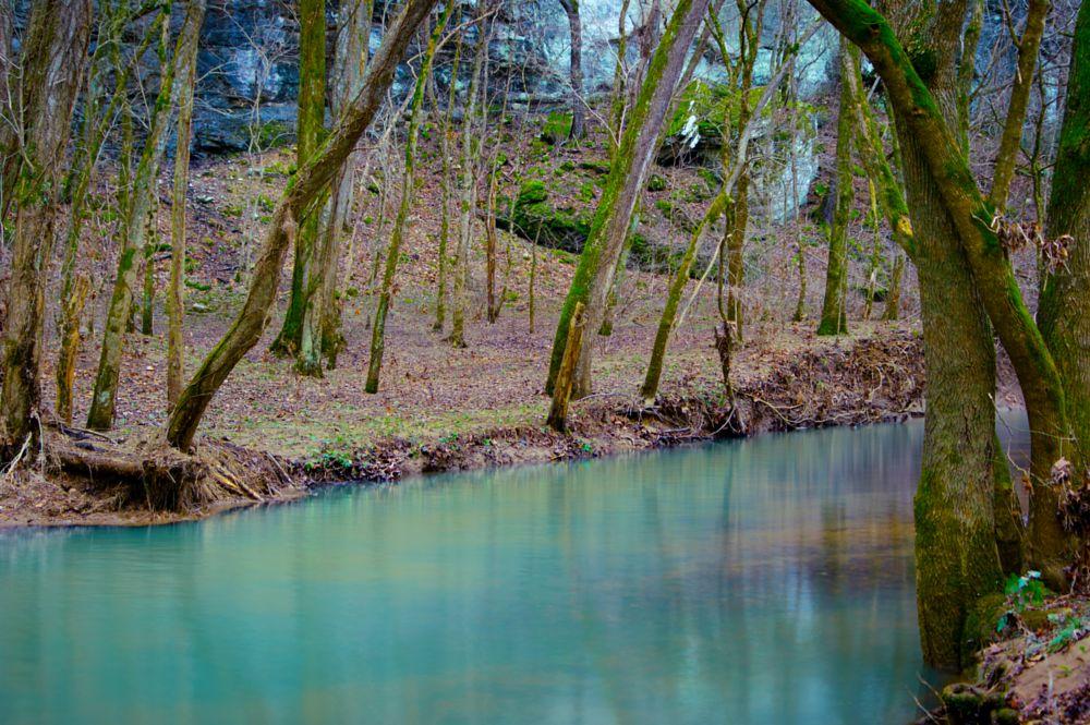Photo in Landscape #shady #forest #stream #river #water #camera #dslr #arkansas #buffalo #trees #moss