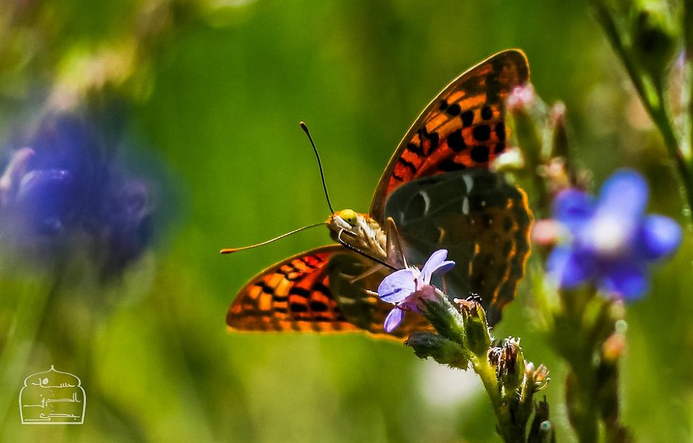 Photo in Macro #flower #butterfly