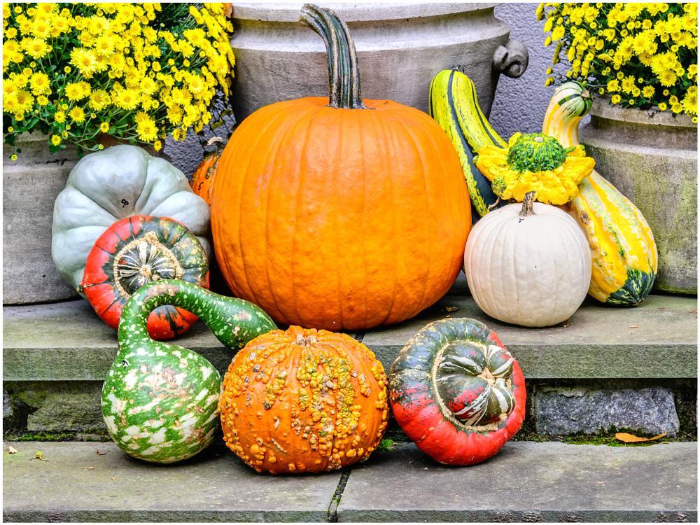 Photo in Random #pumpkin fall gourdes
