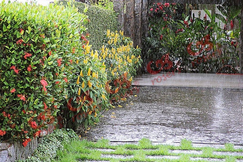 Photo in Random #in #the #rain #flowers