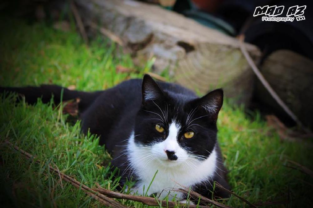 Photo in Animal #toby #cat #new zealand #nz #animal