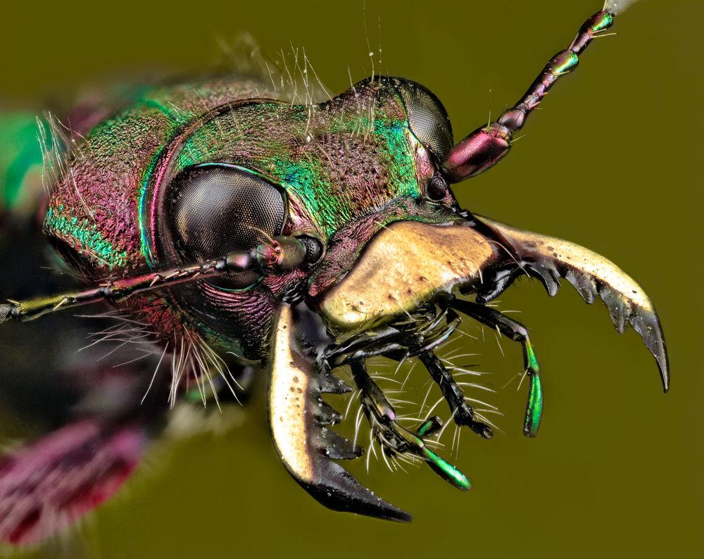 Photo in Macro #macro #macro photography #close-up #bug #insect #wildlife #nature