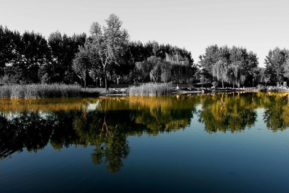Photo in Nature #lake #bursa #selective colour #selective color #colour key #color key