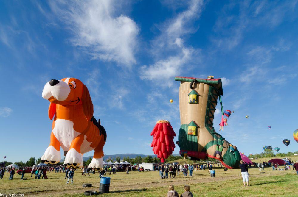 Photo in Random #tony p photos #great reno balloon race #reno #nevada