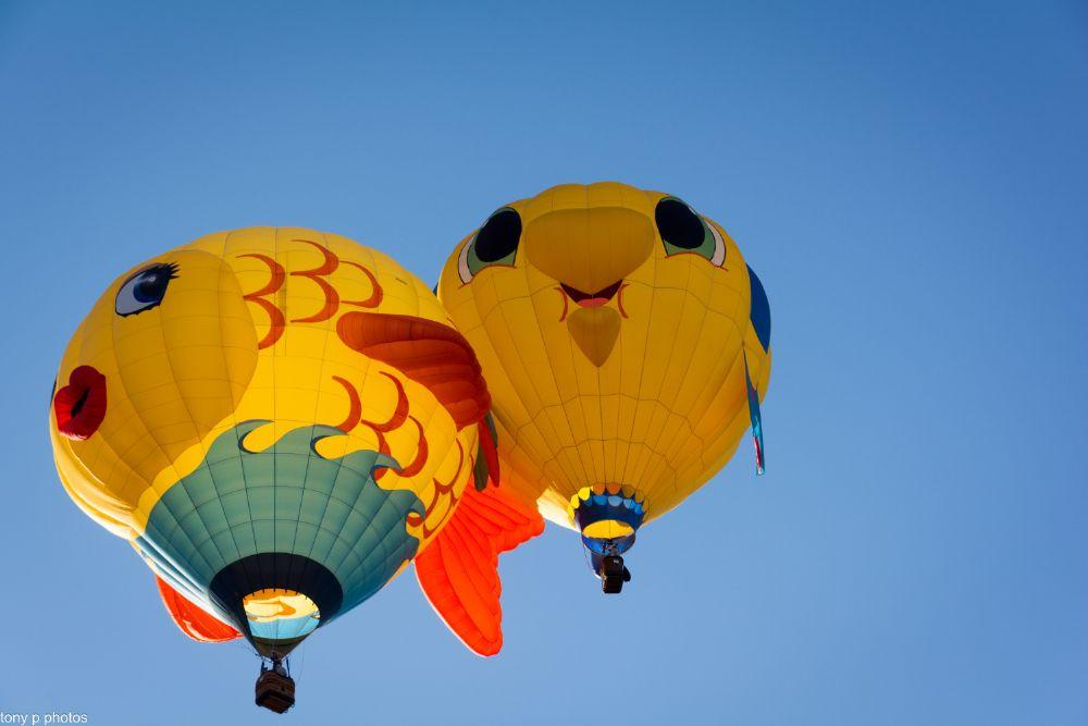 Photo in Family #great reno balloon race #tony p photos #fish #balloons