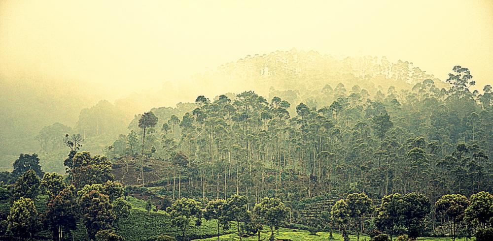 Photo in Landscape #forest teak tea plantation