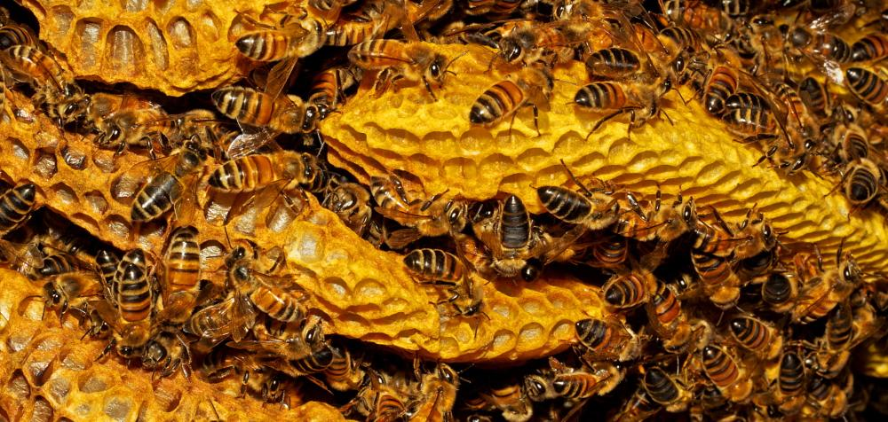 Photo in Nature #bee #bees #insect #honey #hive
