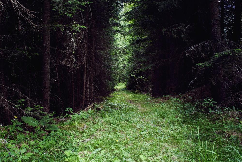 Photo in Landscape #csdany #tree #path