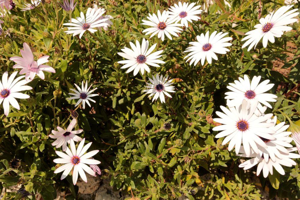 Photo in Nature #flower #frenchriviera #villefranchesurmer #cotedazur