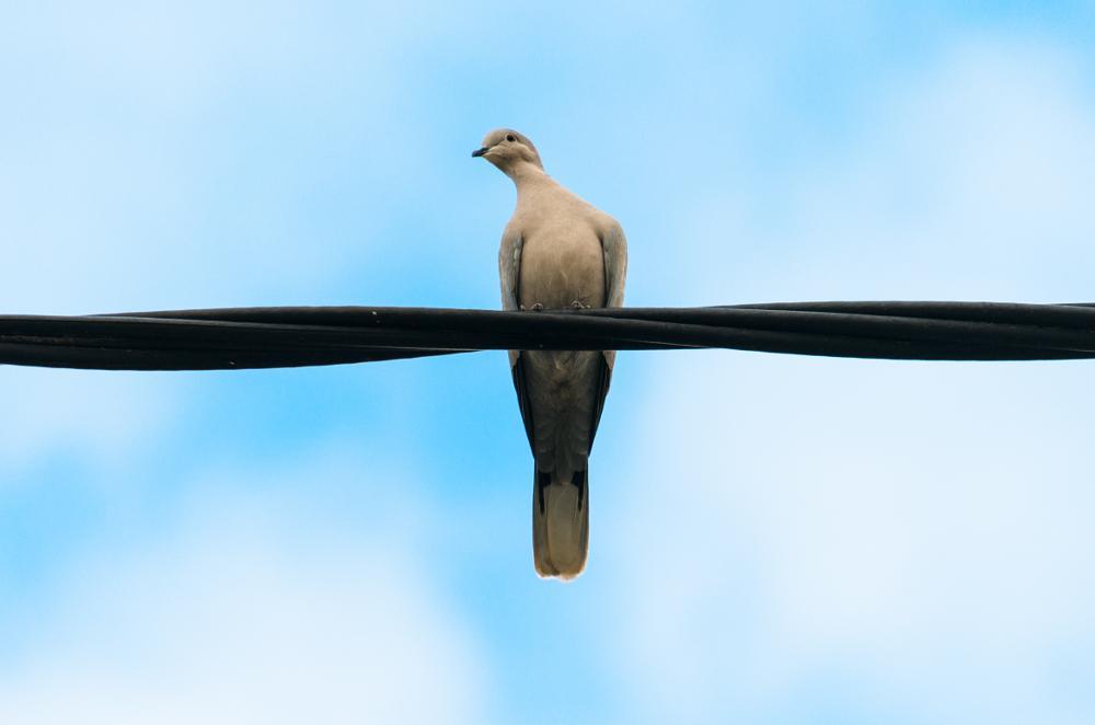 Photo in Animal #bird #sky #animal #clouds