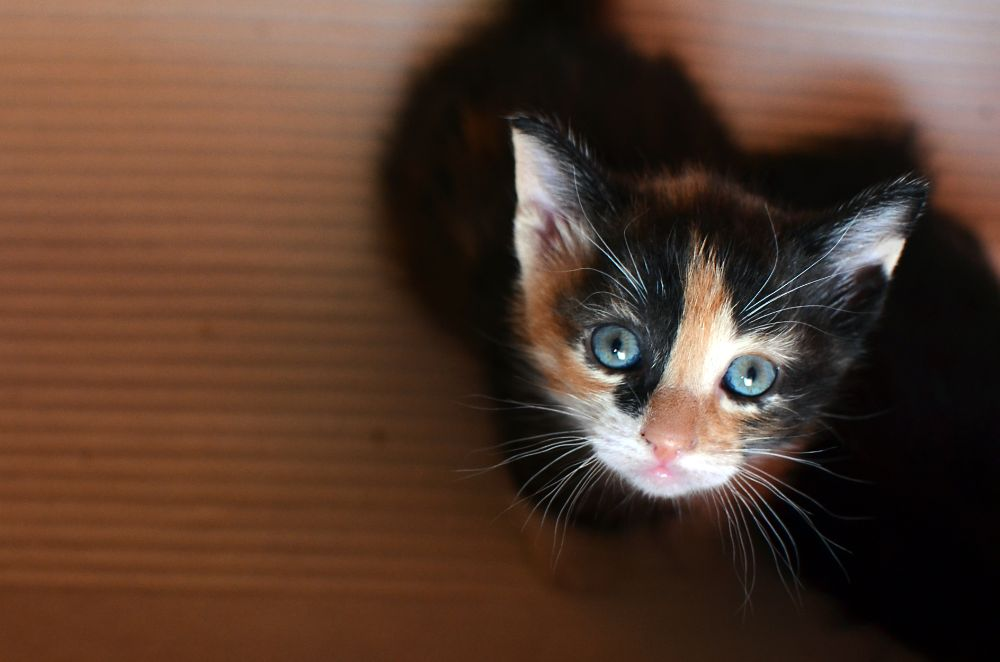 Photo in Animal #animal #cat #nikon