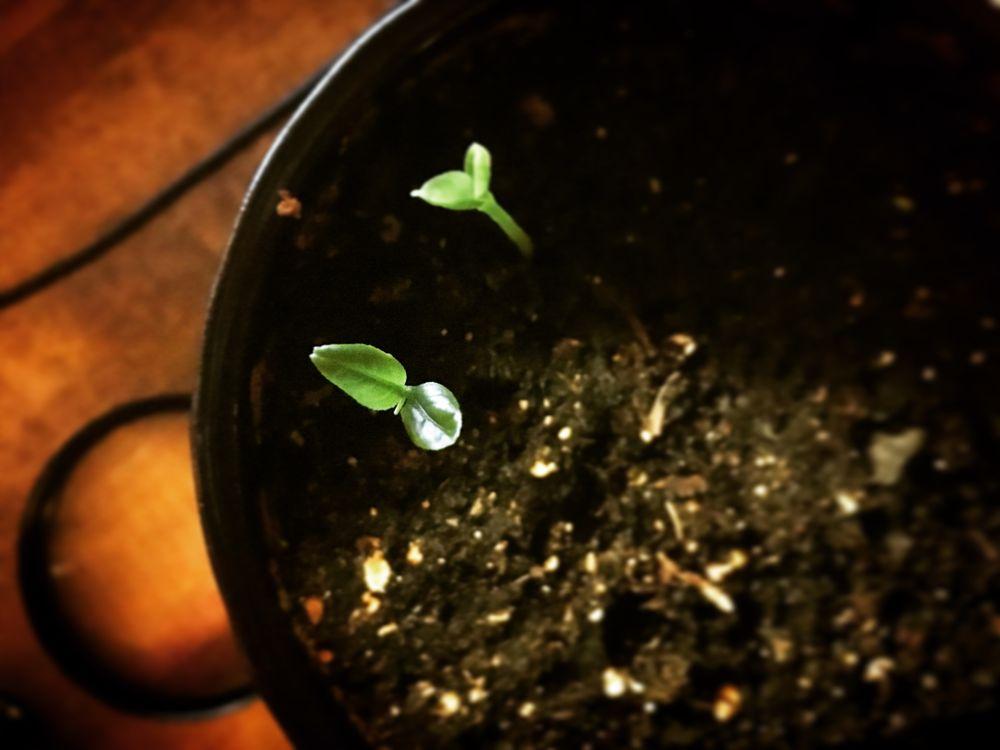 Photo in Random #plant #spring