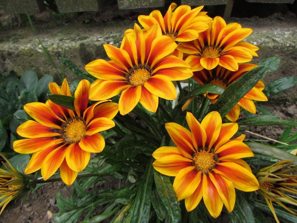 Photo in Nature #summer #flower #nectar #honey #stamen #pollen