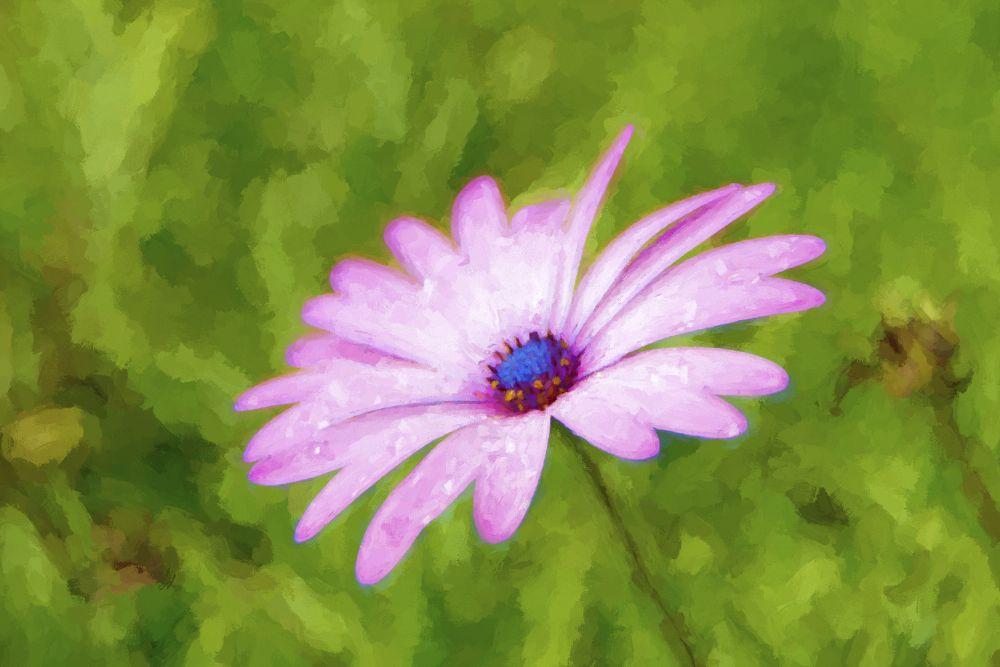 Photo in Random #daisy #flower #impressionist