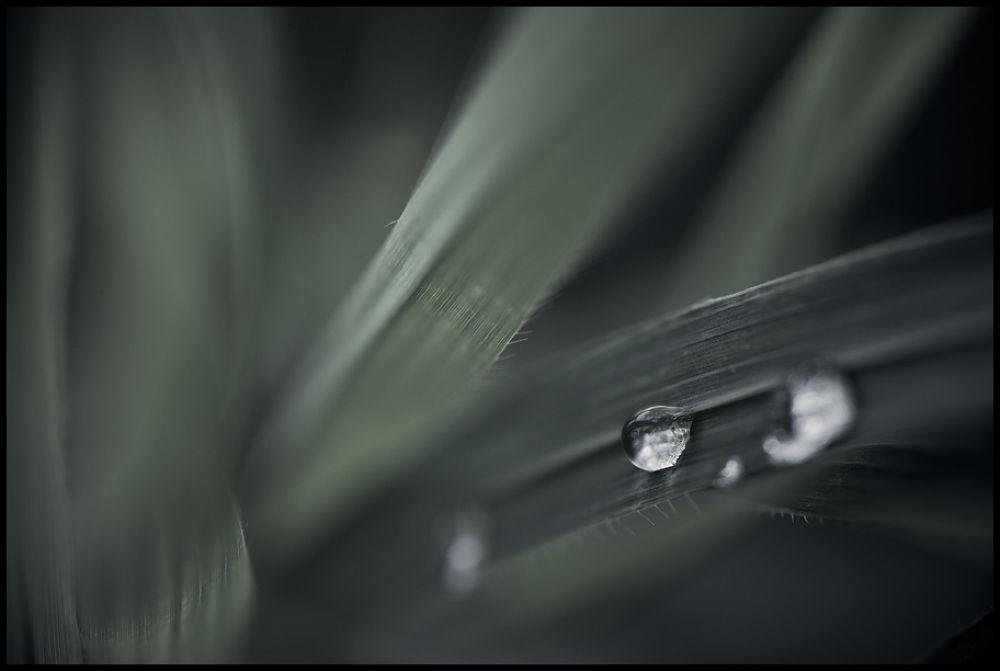 Photo in Macro #macro #nature #water #drop #grass