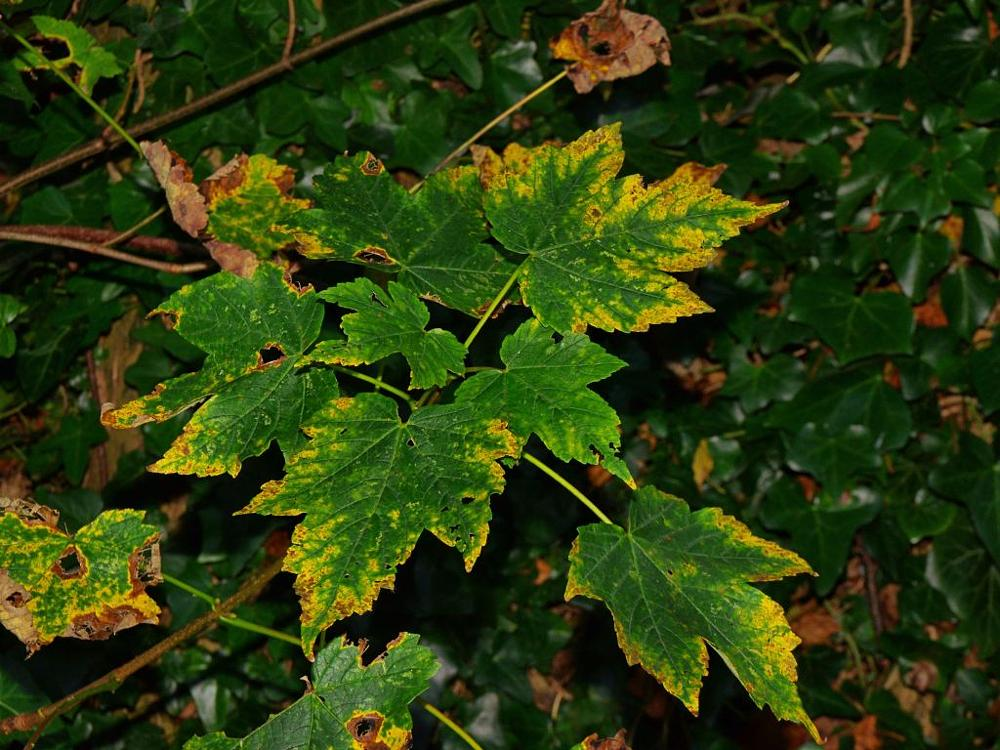 Photo in Nature #autumn #leaves #flora