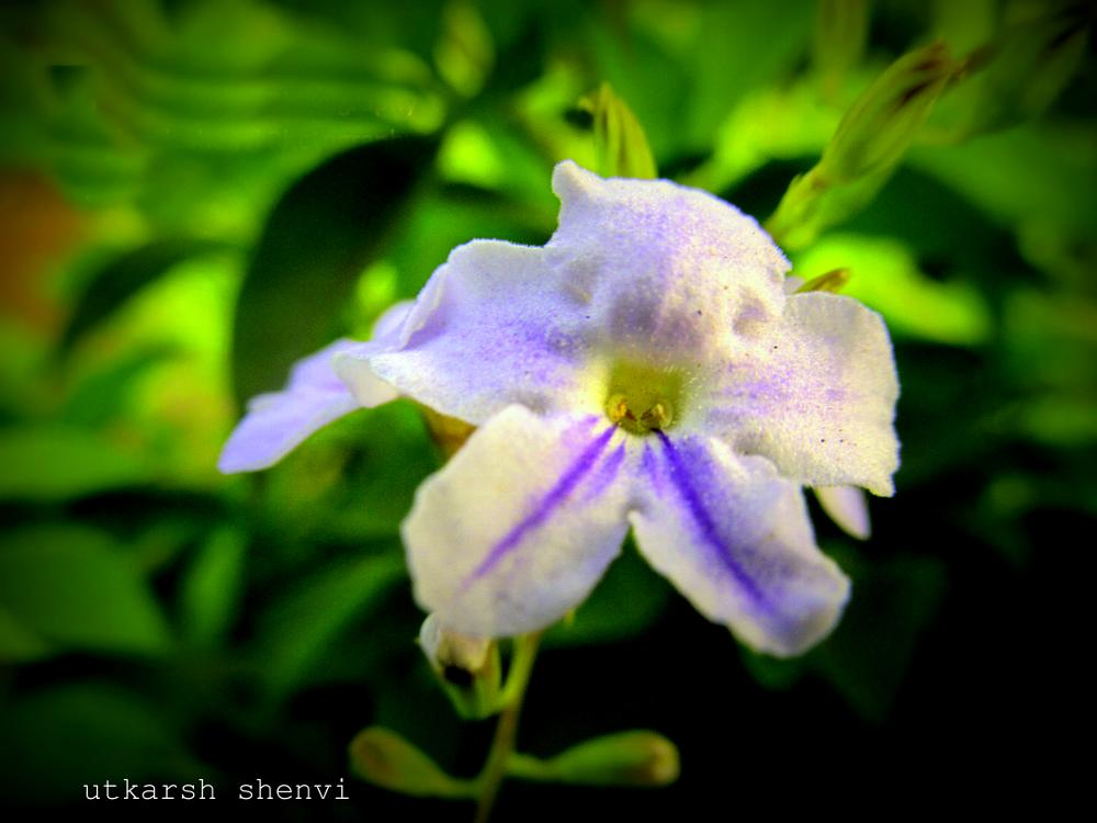 Photo in Nature #flower #nature #blue #capture #green #close-up #canon